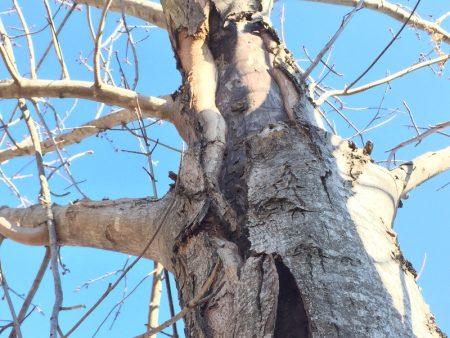 Rocky.Tree.OK.2016a