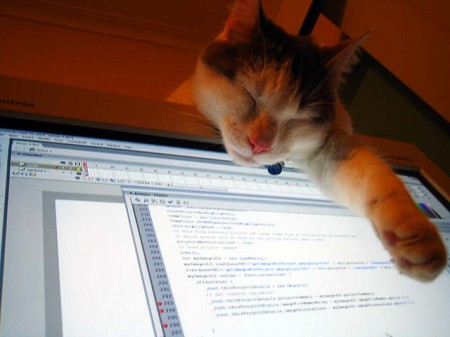 computer-coding-cat